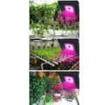 LED growing lamps 50W